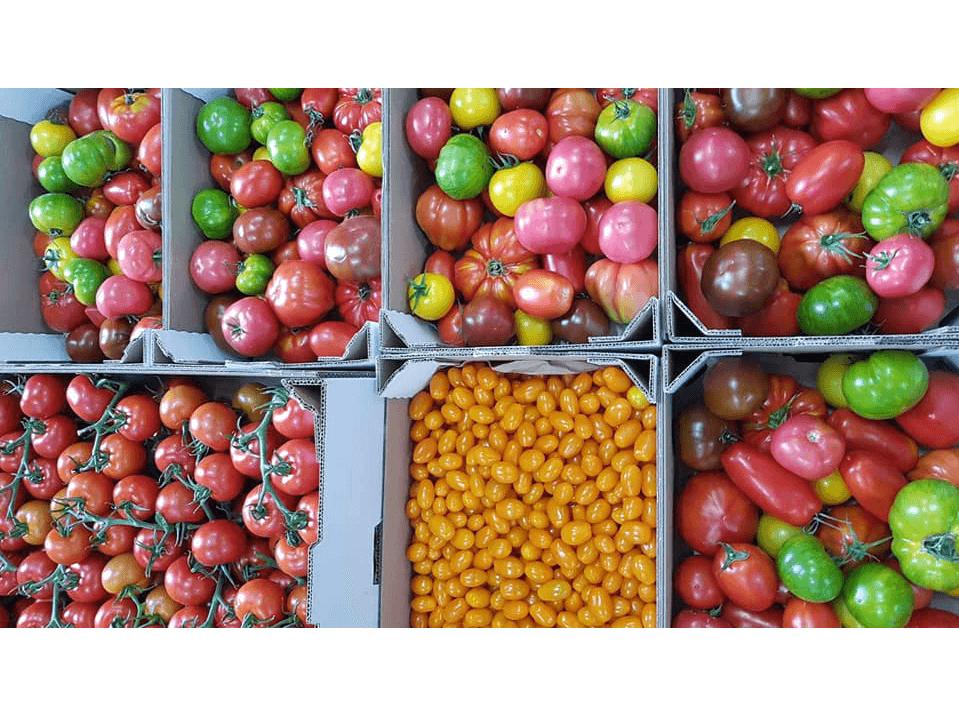 tomates_Au Potager de Kervoigen_2