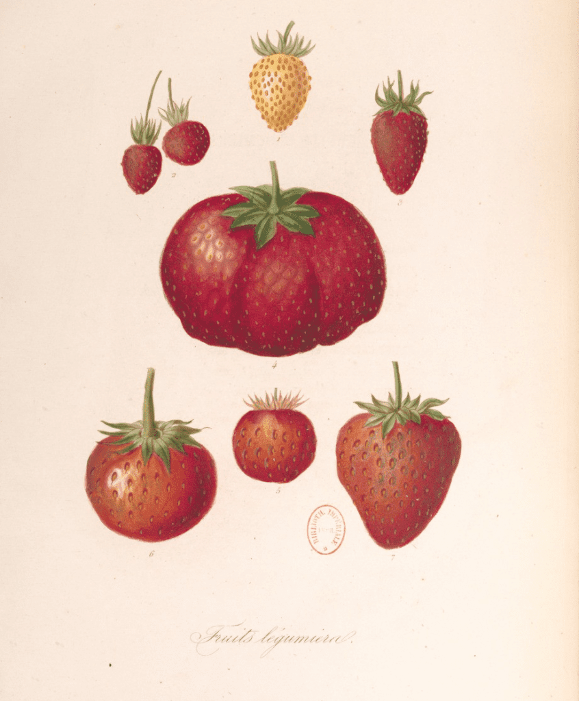 Le règne végétal 1854 Jean Augustin BARRAL Aristide DUPUIS GallicaBNF