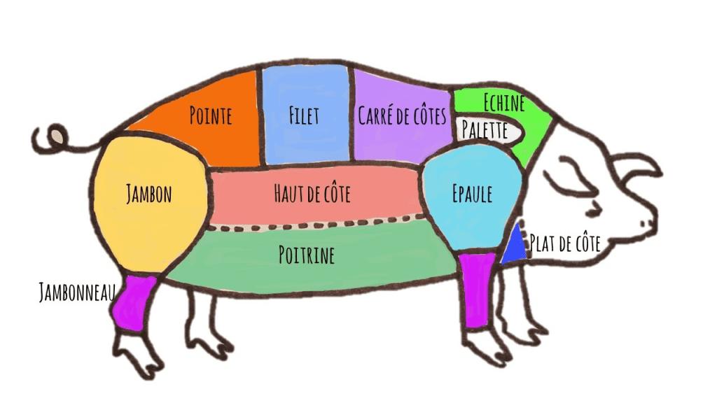 Cochon 03 schema parties du porc