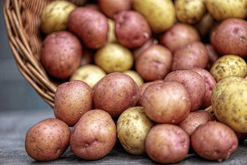 pommes de terres nouvelles variete