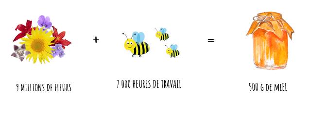 travail necessaire des abeilles pour produire 500g de miel