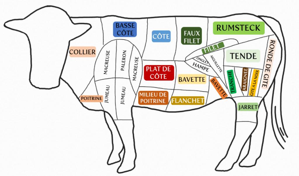 les differentes parties de la vache